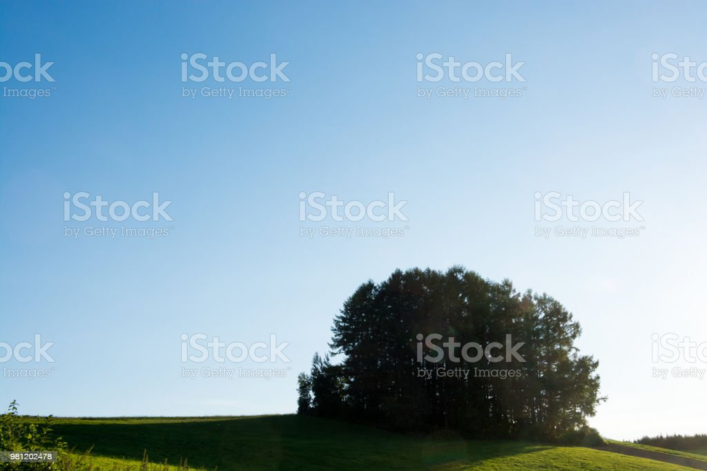 Green hill and pine forest in BIei stock photo