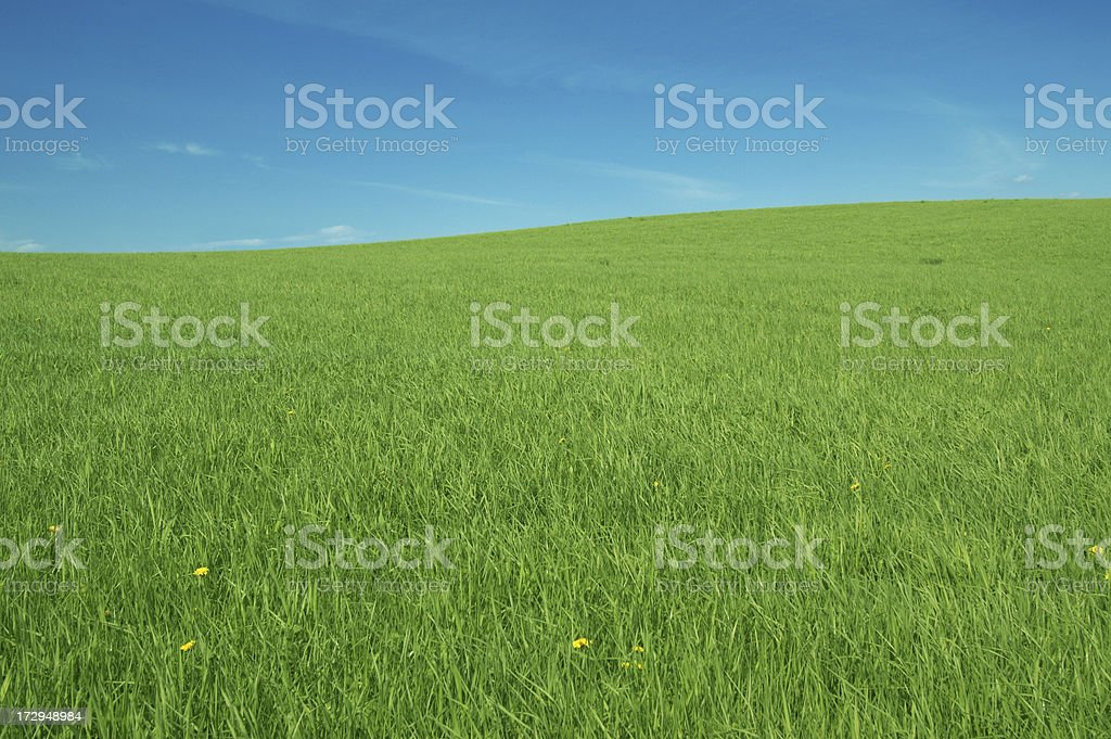 Green Hill Landscape royalty-free stock photo