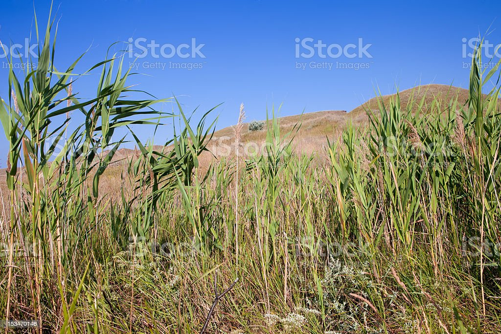 Green hills and blue sky royalty-free stock photo