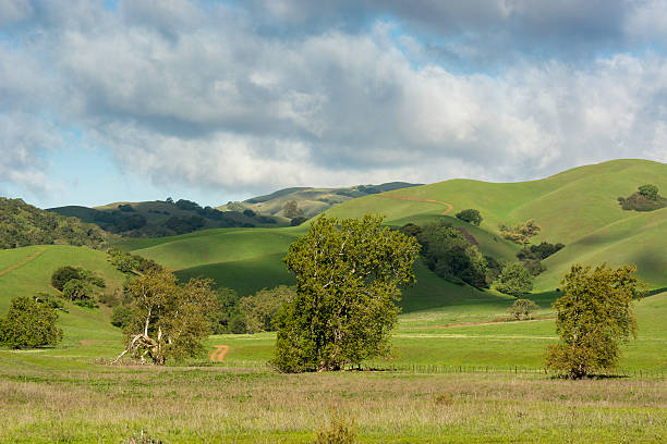 green hills and cloud shadows - central coast california stock photos and pictures