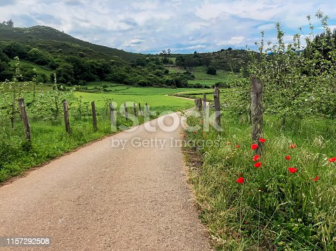 Green hills, empty country road and and blooming red poppies. Summer landscape in sunny day