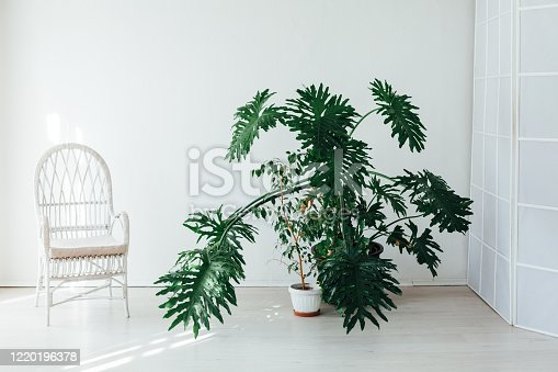 1095381860 istock photo green home plant and white chair in the interior of the white room 1220196378