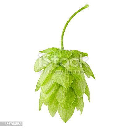 green hop, isolated on white background, clipping path, full depth of field