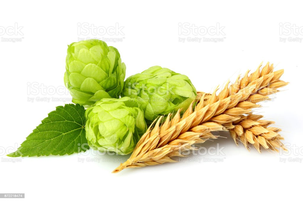 Green hops, ears of barley and wheat grain. stock photo