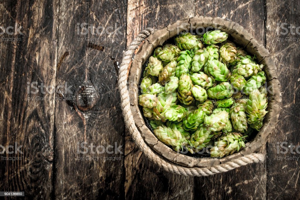 Green hops for beer in a wooden bucket. stock photo