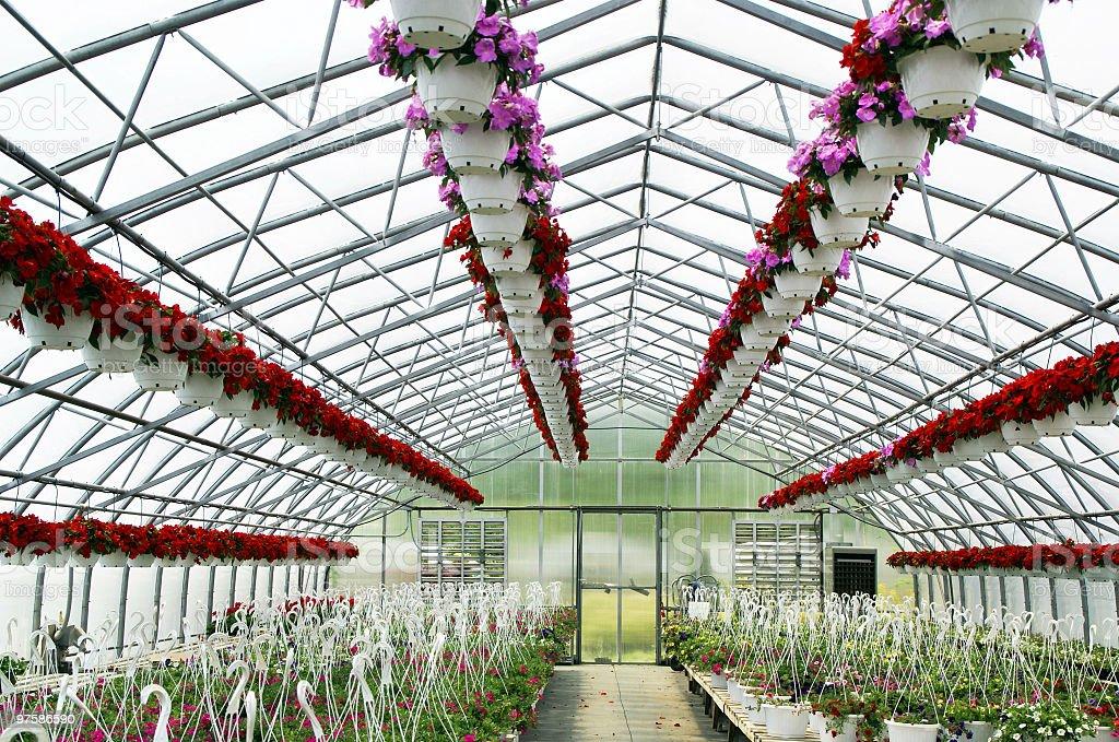 Green House plein de fleurs photo libre de droits