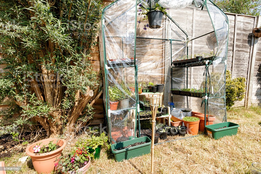 Green house in garden stock photo