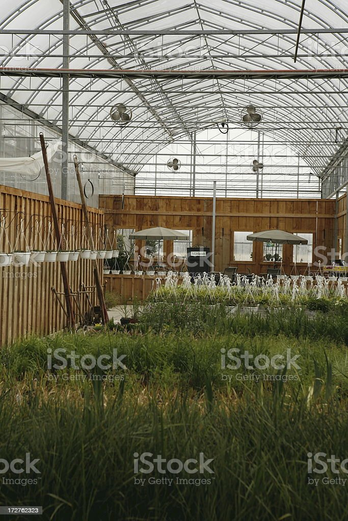 Green House Interior Royalty Free Stock Photo