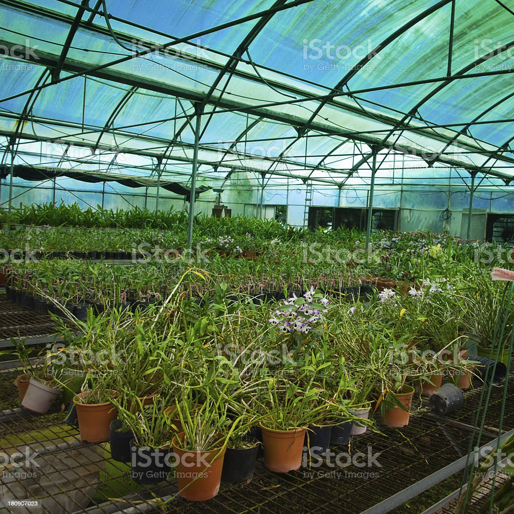 green house orchid flower nursery royalty-free stock photo