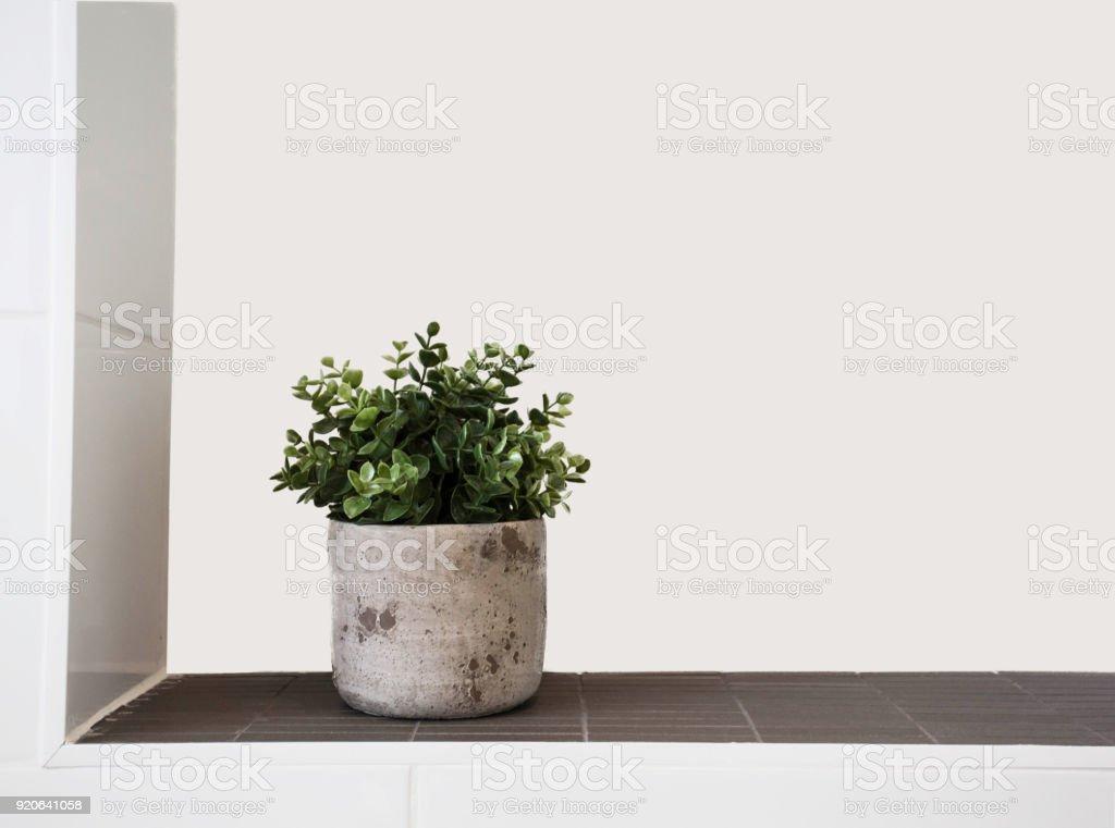 Grüne Zimmerpflanze in Keramiktopf – Foto