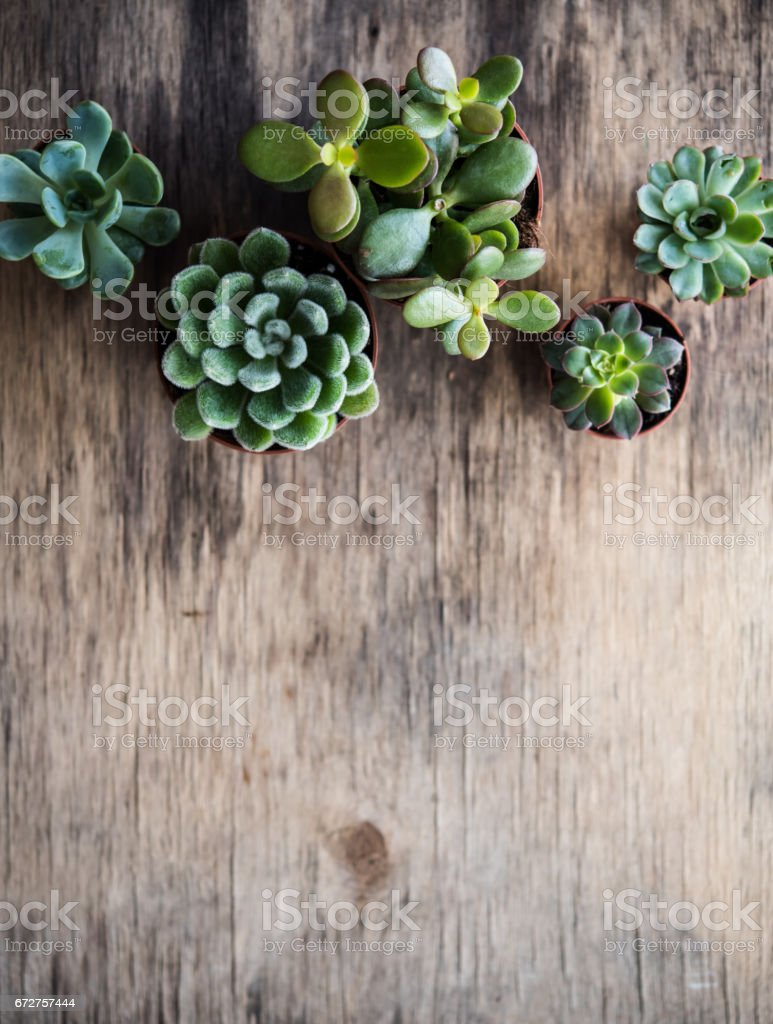 Green house plants potted, succulents in a basket stock photo