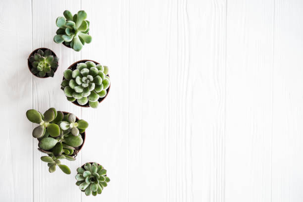 Green house plants potted, succulentson clean white wooden backg stock photo