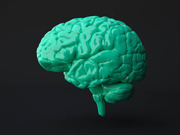Green human brain on dark background Green human brain on dark background. Computer generated image. auditory cortex stock pictures, royalty-free photos & images