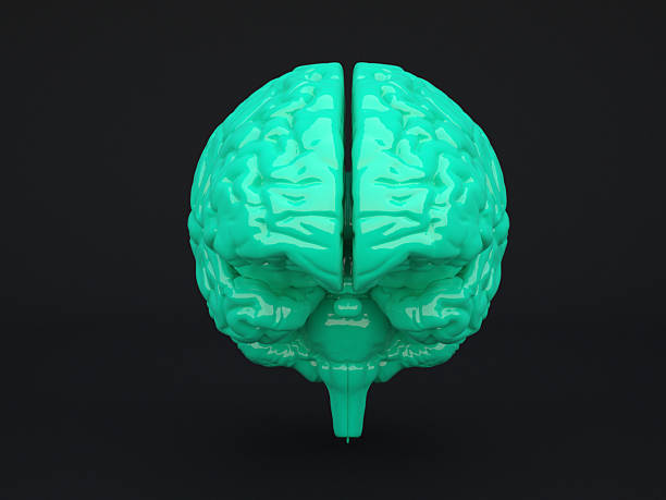 Green human brain on dark background Green human brain on dark background. Computer generated image. cerebral aqueduct stock pictures, royalty-free photos & images