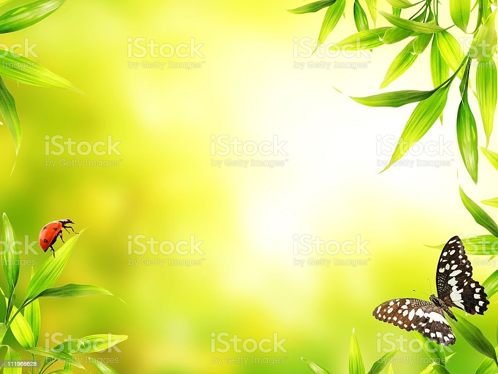 Green image with border of leaves and two bugs stock photo