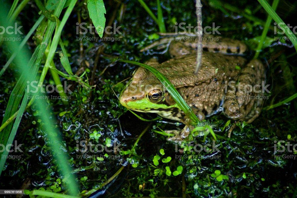 Green in Green stock photo