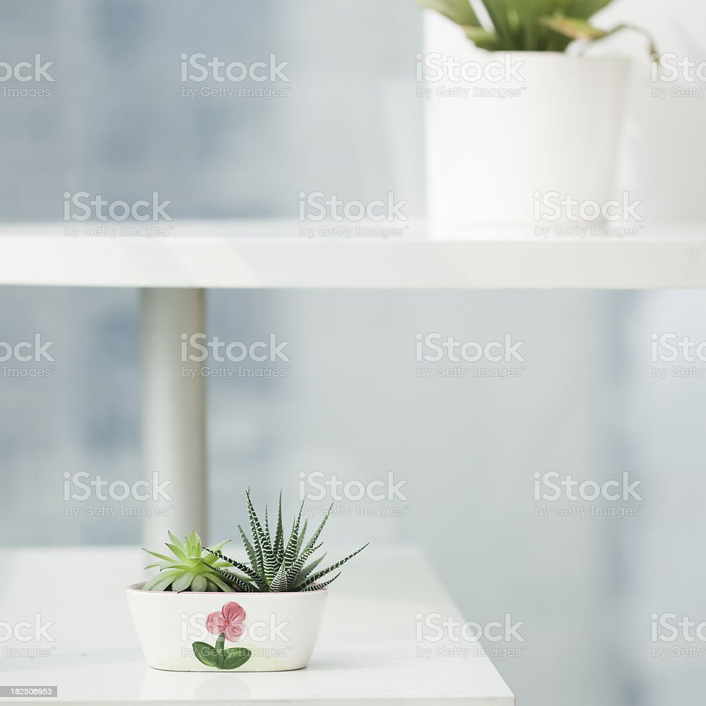 Green in Spring royalty-free stock photo