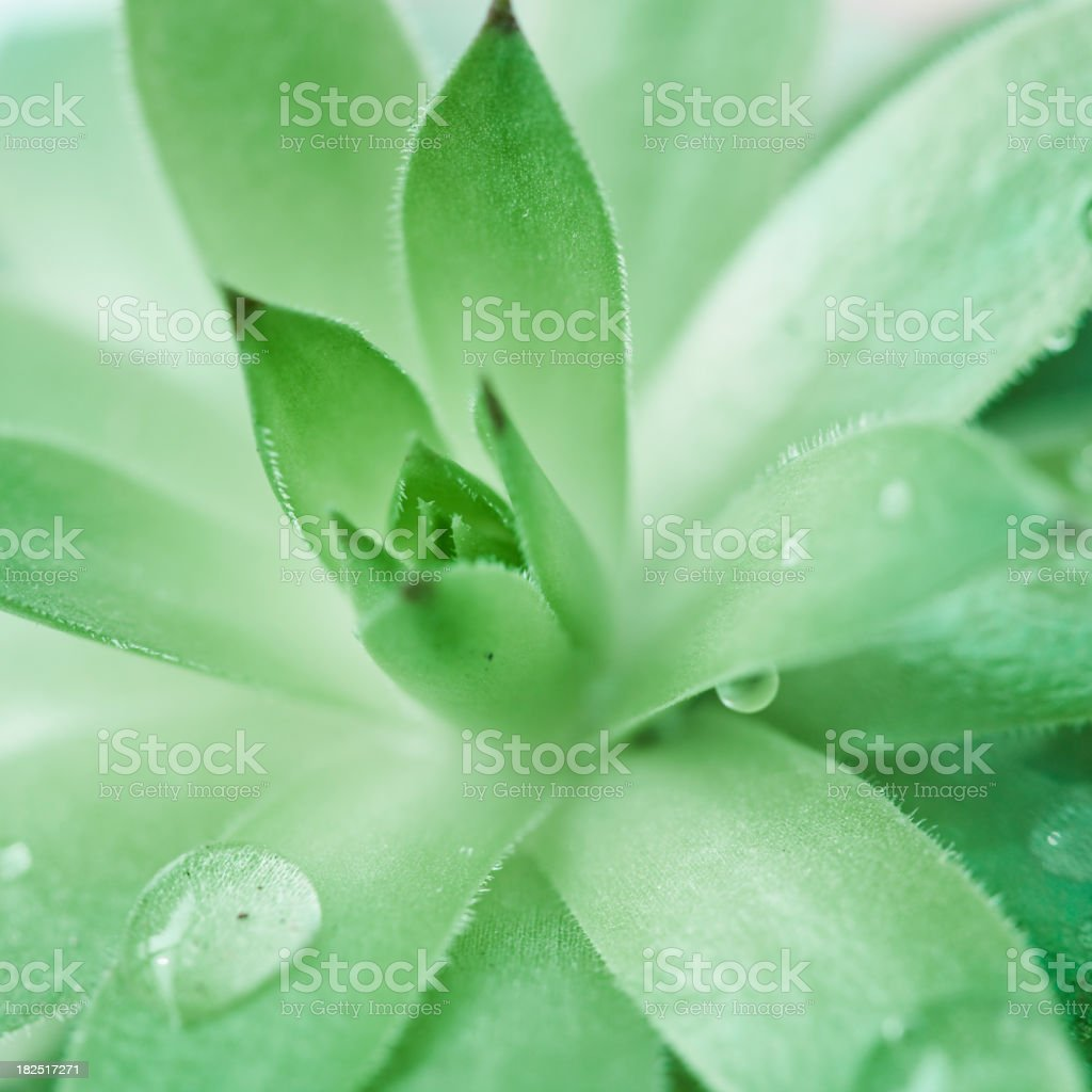 Green in Spring,Aloe Sap stock photo