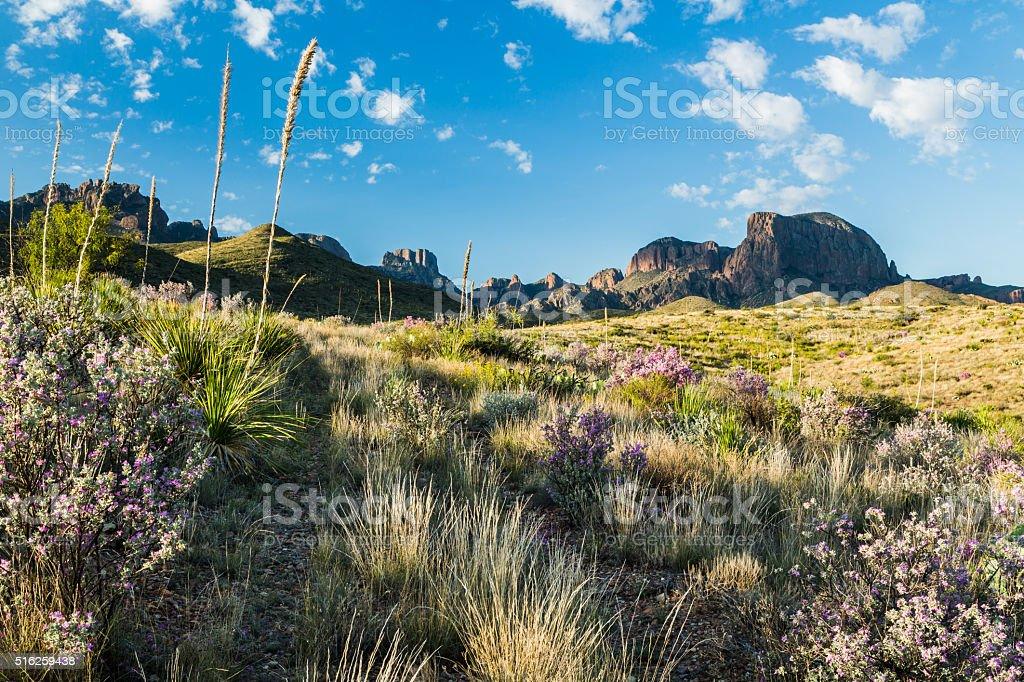 Green in the Desert stock photo