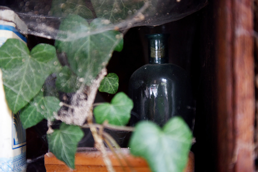Green ivy and a vintage glass