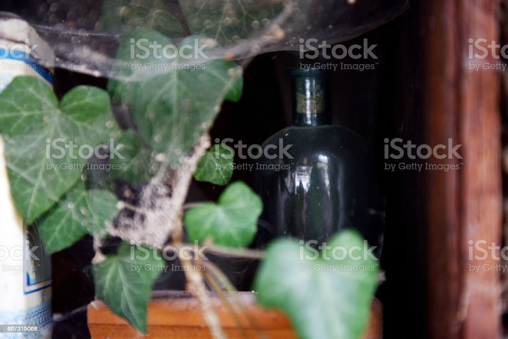 Green ivy and a vintage glass stock photo