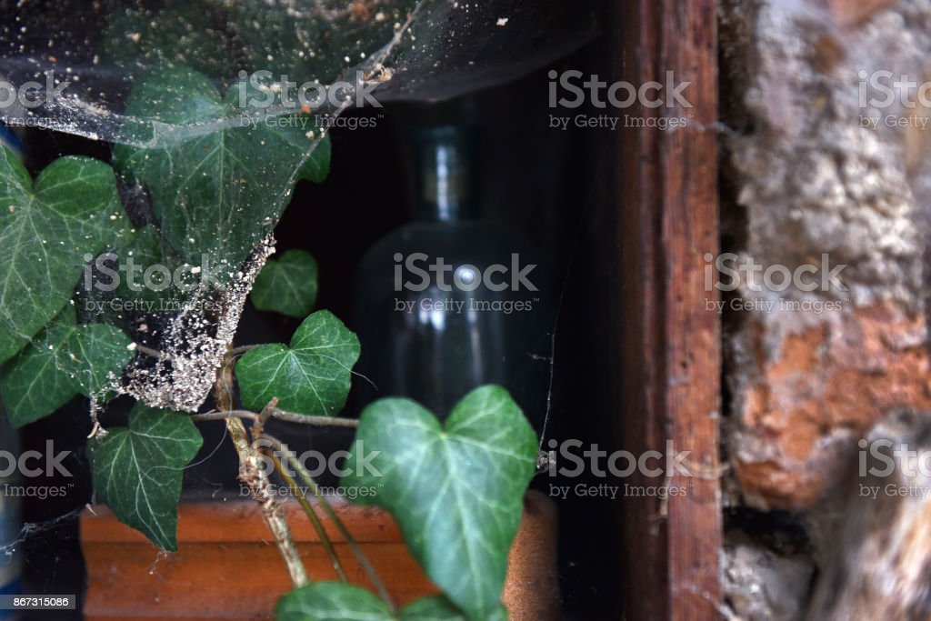 Green ivy leaves and spider web stock photo