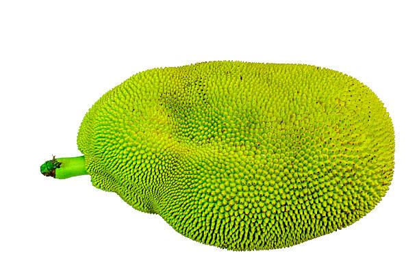 green jackfrucht - jackfrucht stock-fotos und bilder