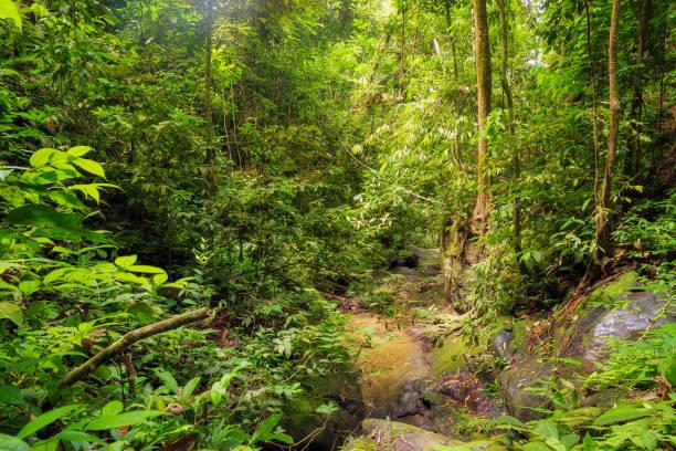 Green jungle of sumatra picture id1186292657?b=1&k=6&m=1186292657&s=612x612&w=0&h=nakeoojkkovhsf 6nqanjkp2gcordvcakvysdupbqse=