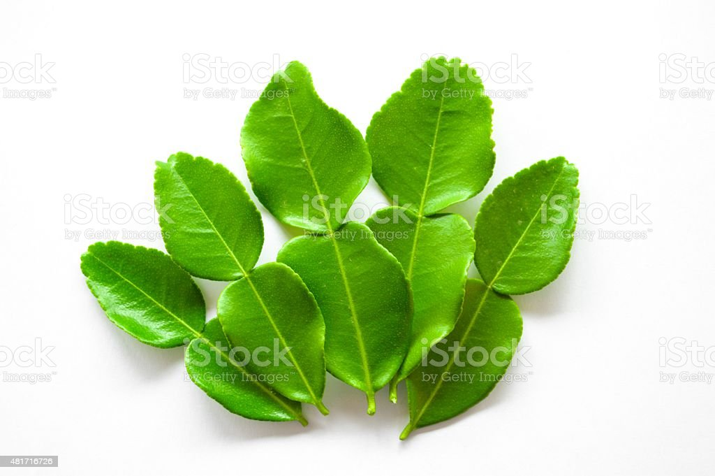 green Kaffir lime stock photo