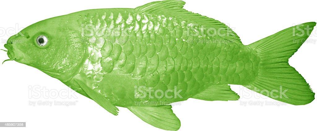 green Koi Fish stock photo