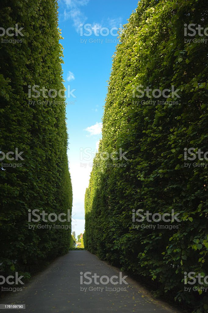 Green labyrynth royalty-free stock photo