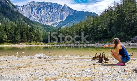 A woman in shorts feeding a flock of wild ducks at the shore of Green Lake in an Alpine valley in Austria. Spring in the valley. The ducks curiously discover the area. High mountain range in the back