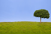 Green landscape and tree