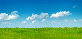 empty green field and clear blue sky.