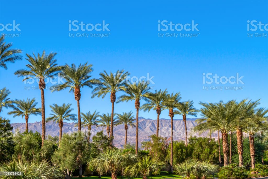 Green landscape with a row of palm trees and mountain range in the...