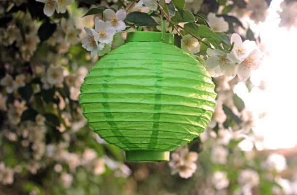 grüne laterne von weiß blühenden busch hängen - jasmin party stock-fotos und bilder