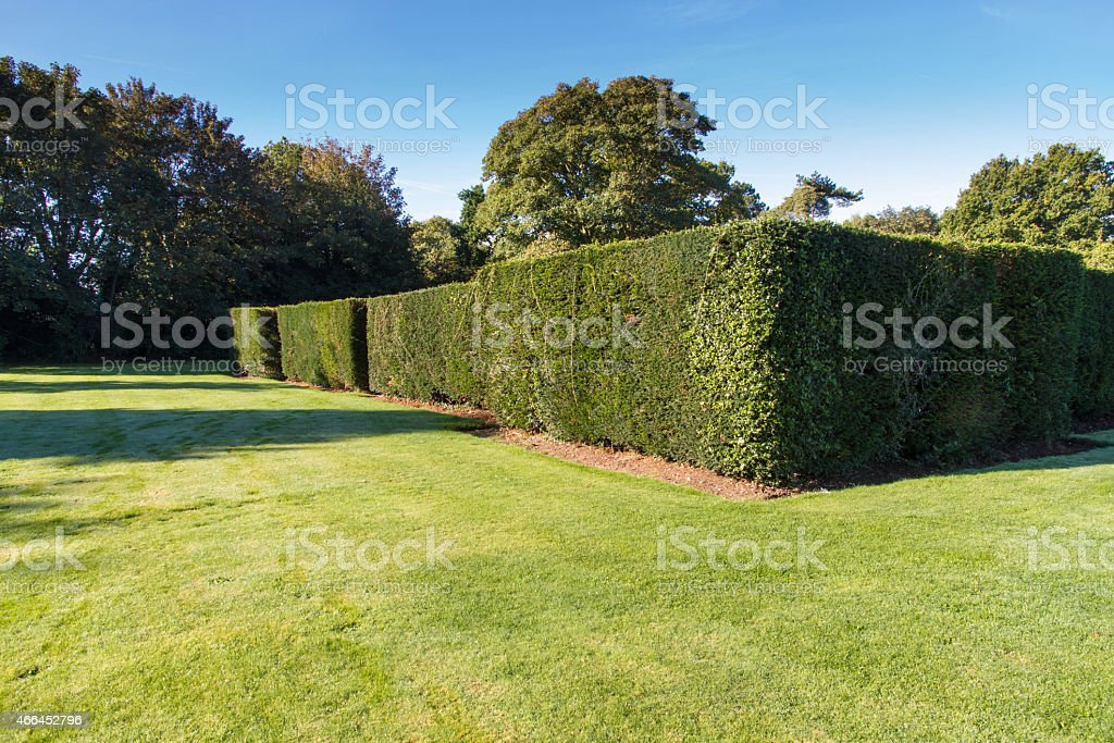 Green lawn and well maintained hedge. stock photo