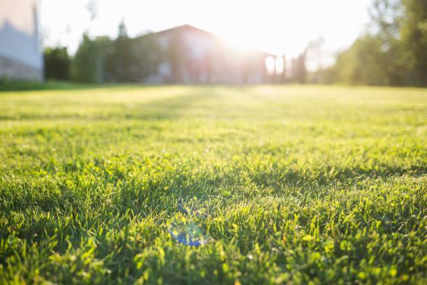 gramado verde em casa. em um dia ensolarado de verão. - gramado terra cultivada - fotografias e filmes do acervo