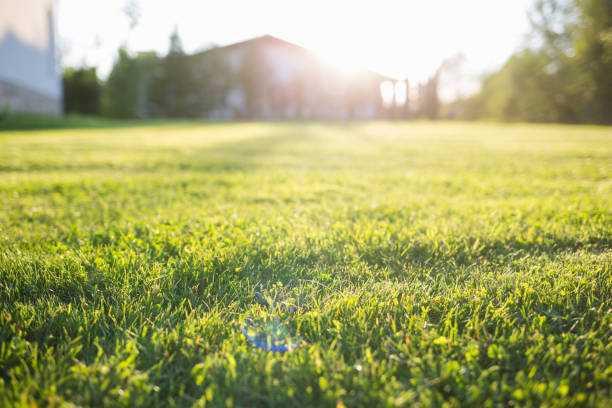 green lawn at home. On a Sunny summer day. lawn at home. On a Sunny summer day lawn stock pictures, royalty-free photos & images