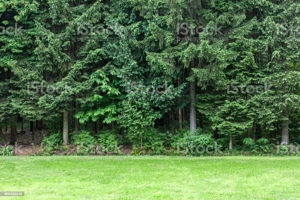 green lawn in front of forest royalty-free stock photo