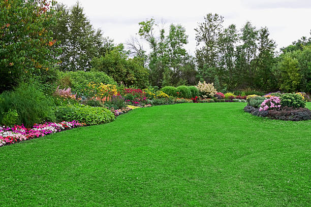 Green Lawn in Landscaped Formal Garden Green lawn (with a bit of clover) in a colorful landscaped formal garden. lawn stock pictures, royalty-free photos & images