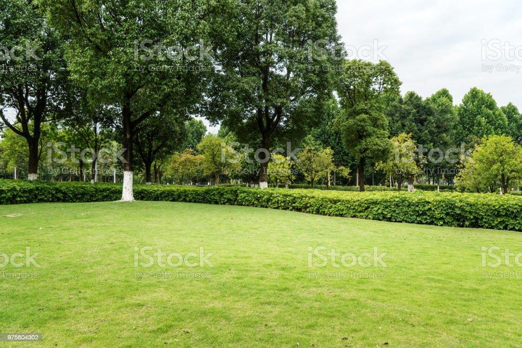 Grünen Rasen in öffentlichen Stadtpark - Lizenzfrei Baum Stock-Foto