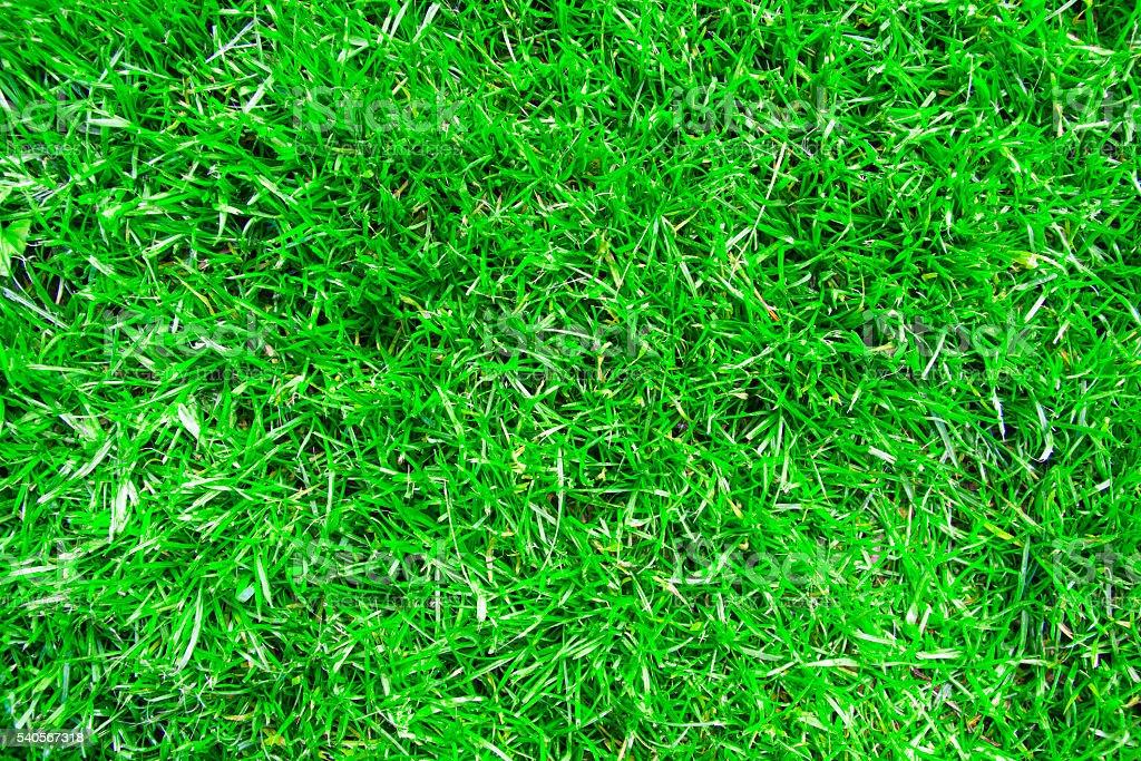 Grünen Rasen  – Foto