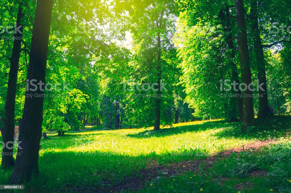 Green lawn surrounded by trees in park on a sunny summer morning. zbiór zdjęć royalty-free
