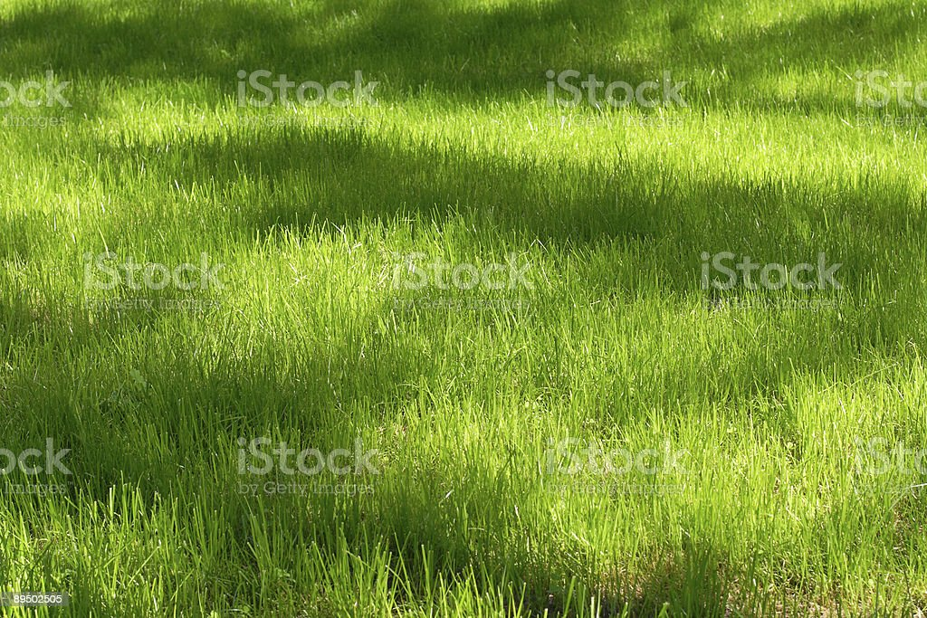 Green lawn with a shadows from trees royalty-free stock photo