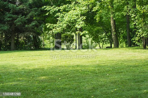 istock Green lawn with trimmed grass and trees in the background, summer Sunny day in the city Park 1200481293