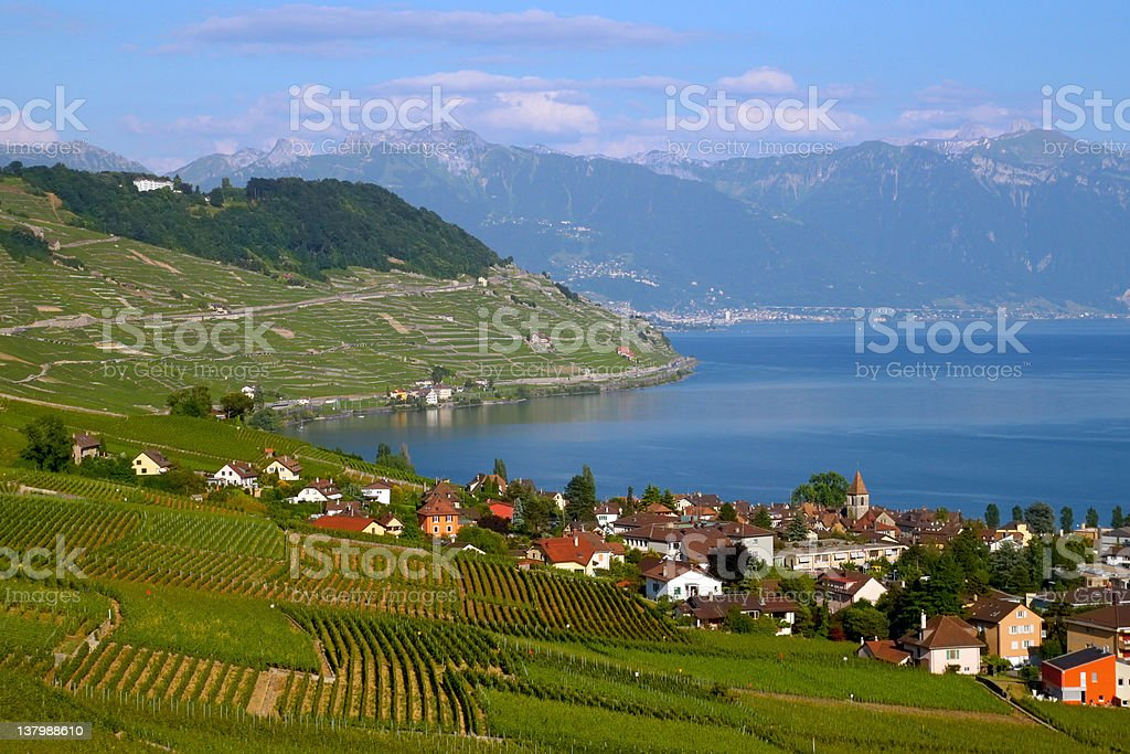 Green Laxaux vineyards against blue Lake Geneva Switzerland The northen hillside of Lake Geneva (Lake Leman), Switzerland, between Lausanne and Montreux is covered in scenic vineyards, all under the name of Lavaux and today a World Heritage Site. Image taken during early summer from the village of Grandvaux, overviewing the village of Cully on the lake shore. HDR image composed using tone compressor technique. Agriculture Stock Photo