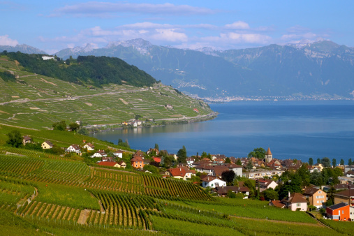 Green Laxaux Vineyards Against Blue Lake Geneva Switzerland Stock Photo - Download Image Now