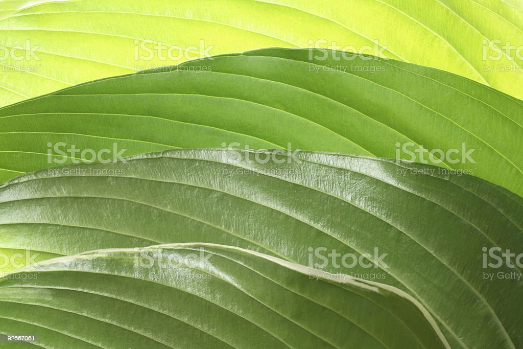 Green leaf abstract background royalty-free stock photo
