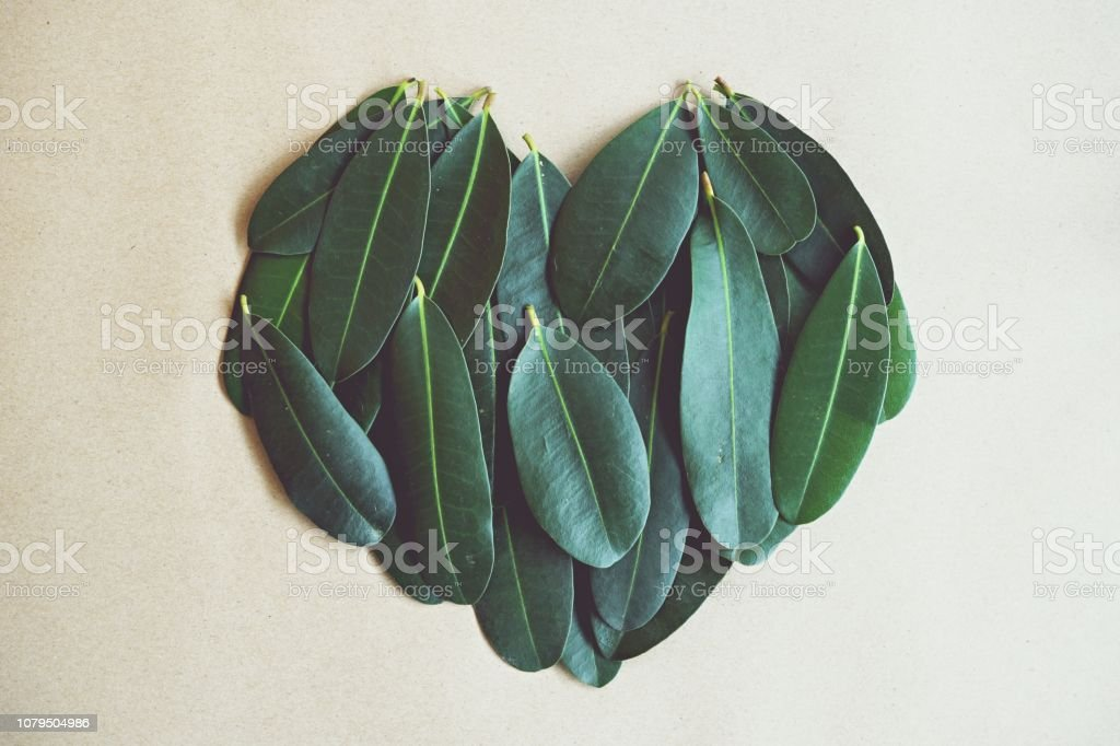 Green leaf arranged into heart shape texture background, ecology passion concept, copy space stock photo